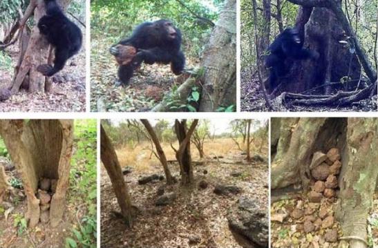 singes-rituels-afrique