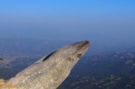 Menhir surplombant de plusieurs centaines de métres la vallée